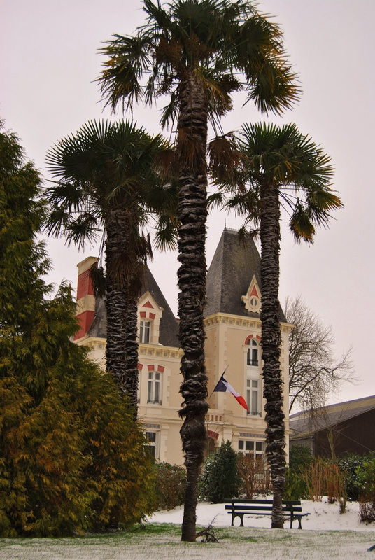 palm trees covered in snow