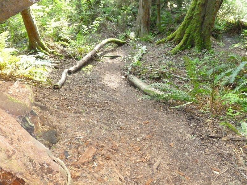 Trail_Pic_1_-_Copy