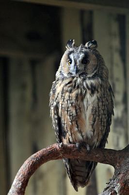 Owls of Riga's Zoo