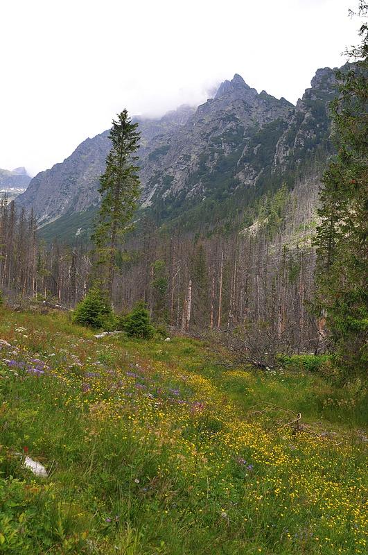 High Tatras in Bloom