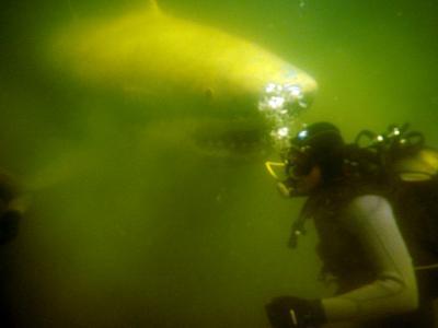 Sloka Diving