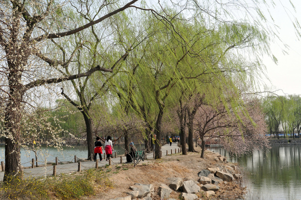 Spring in the Park of Summer Palace by Victor Francuzov