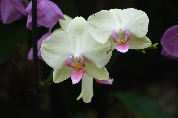 Kew Gardens Orchids by GeorgeManchester