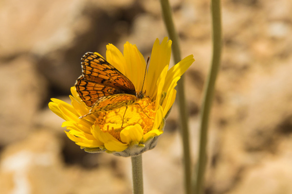 Death Valley - Spring 2015 by Ski3pin