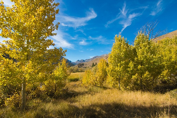 Eastern Sierra Fall Colors - October 2016 by Ski3pin