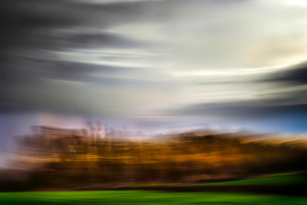 Stand of Trees - ICM - Landscape - Roxanne Bouche Overton