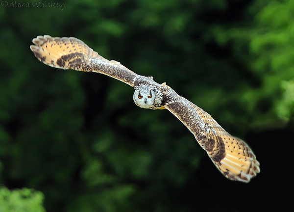 Glide by Alpha Whiskey Photography