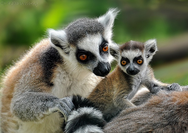 Parental by Alpha Whiskey Photography