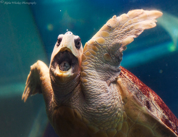 Turtle by Alpha Whiskey Photography