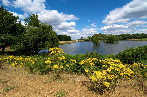 Richmond Park by Alpha Whiskey Photography