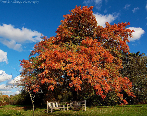 Kew by Alpha Whiskey Photography