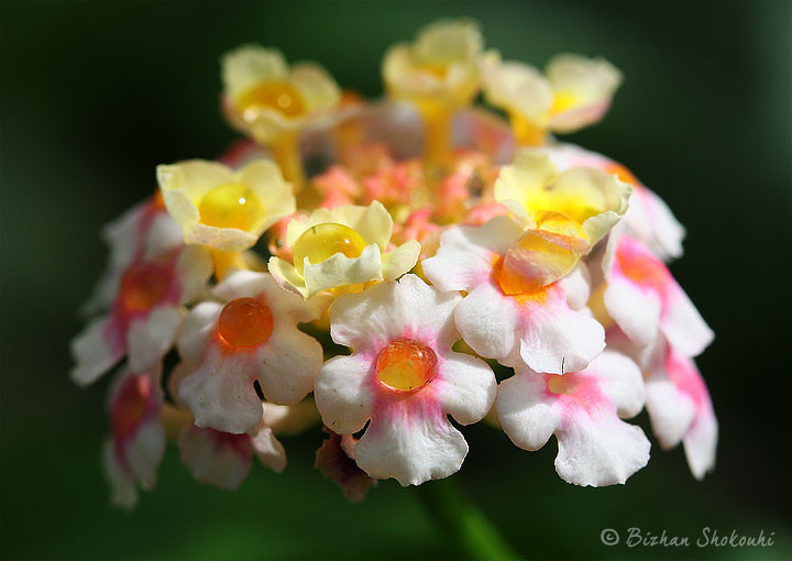 Bizhan's Butterflies