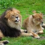 Lisa's Trip To Southwick Zoo