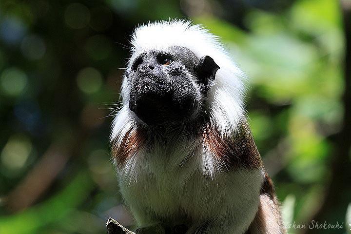 Bizhan's Linton Zoo Shots