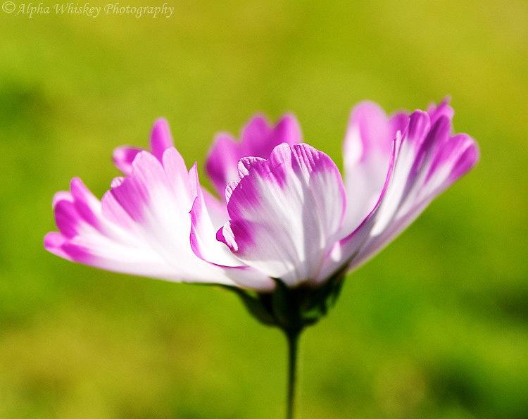 Garden Flora and Fauna