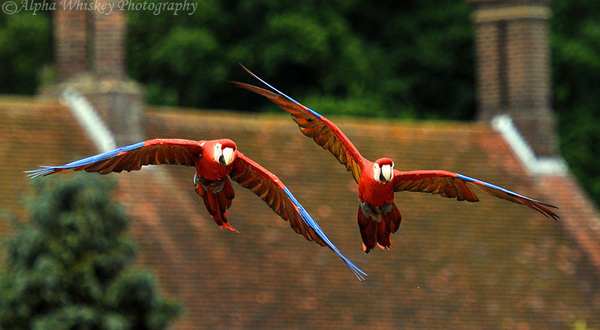 Tandem Flight by Alpha Whiskey Photography