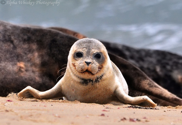 Seals by Alpha Whiskey Photography by Alpha Whiskey...