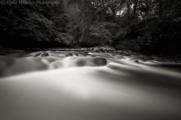 Brecon Rush by Alpha Whiskey Photography