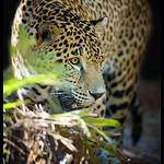 Brevard Zoo