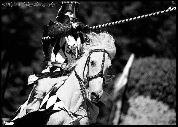 Jouster by Alpha Whiskey Photography