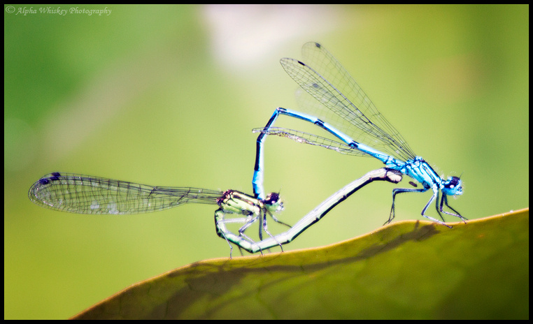 Mating