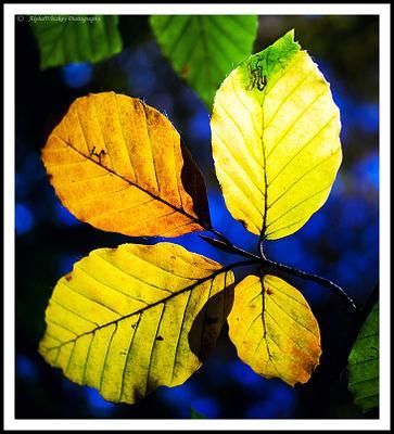 Autumn Colour 2013