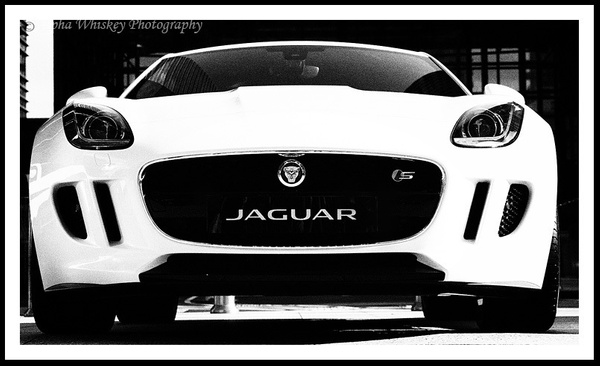 13 by Alpha Whiskey Photography