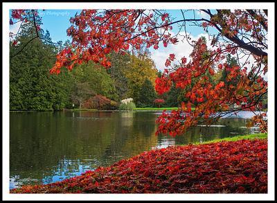 Chasing Autumn Colours