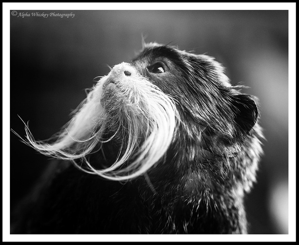 Animal Portraits by Alpha Whiskey Photography