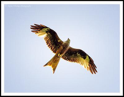 Waddesdon Birds