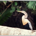 Cano Negro Wildlife