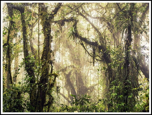 Cloud Forest by Alpha Whiskey Photography