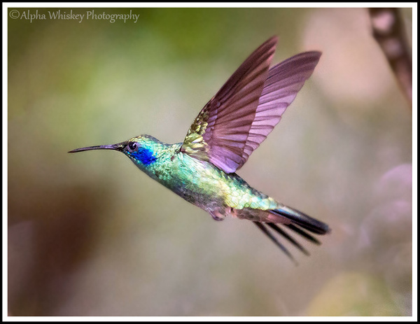 Hummingbird Garden by Alpha Whiskey Photography