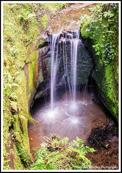 9 Shanklin Chine by Alpha Whiskey Photography