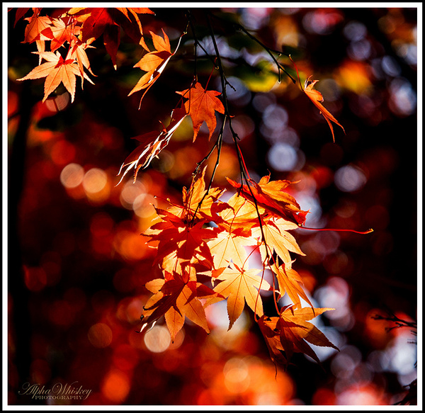 Autumn Colours 2016 by Alpha Whiskey Photography