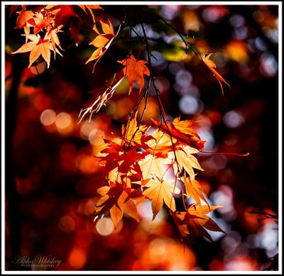 Autumn Colours 2016