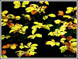 Another Burst Of Autumn