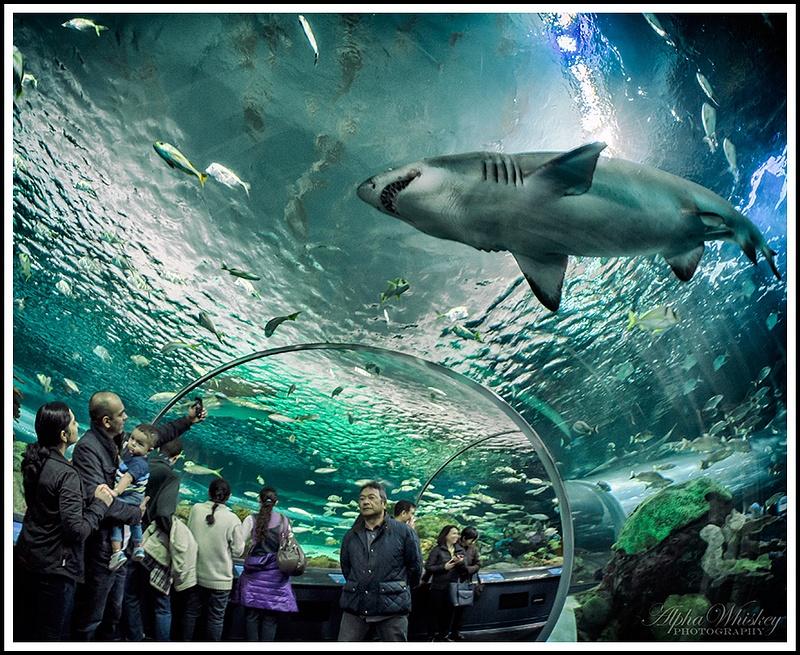 6 Ripley's Aquarium