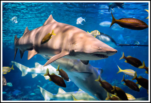 Ripley's Aquarium by Alpha Whiskey Photography by Alpha...