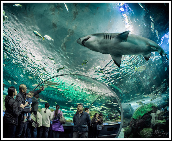 Ripley's Aquarium Of Canada by Alpha Whiskey Photography
