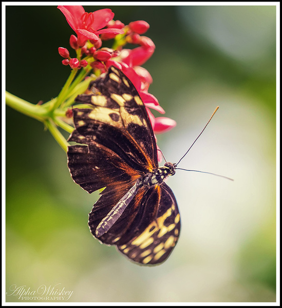 Butterfly Conservatory by Alpha Whiskey Photography