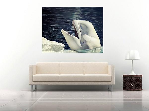 3 beluga by Alpha Whiskey Photography