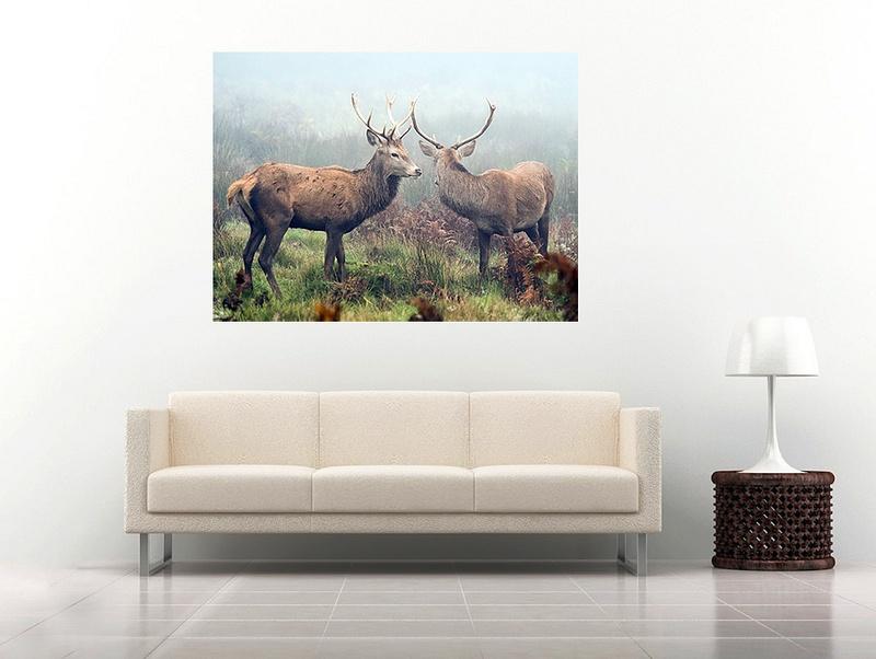 9 deer2