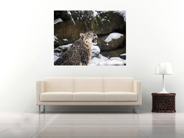 26 snow-leopard by Alpha Whiskey Photography