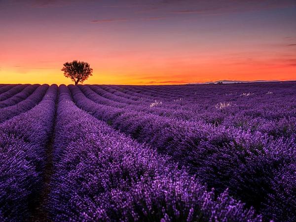 Provence Valensole Sunset - Landscapes by Serge Ramelli