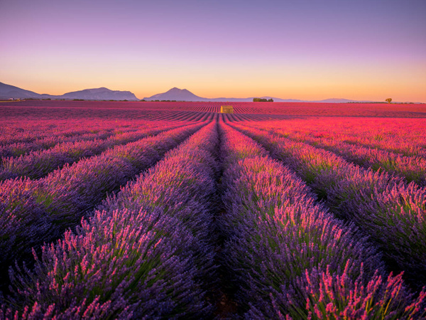 Provence Valensole Morning - Landscapes by Serge Ramelli