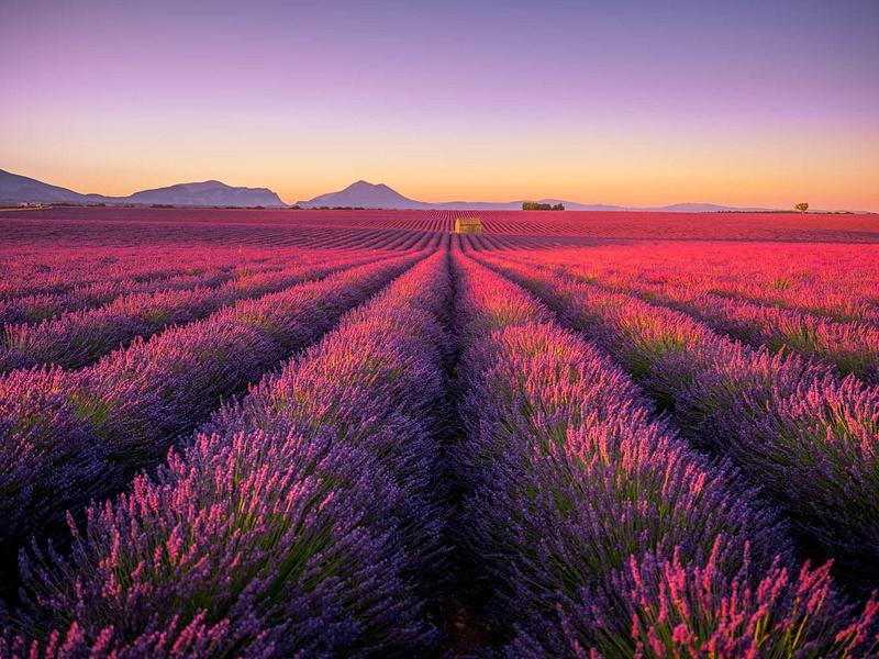 Provence Valensole Morning
