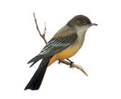 main_birds