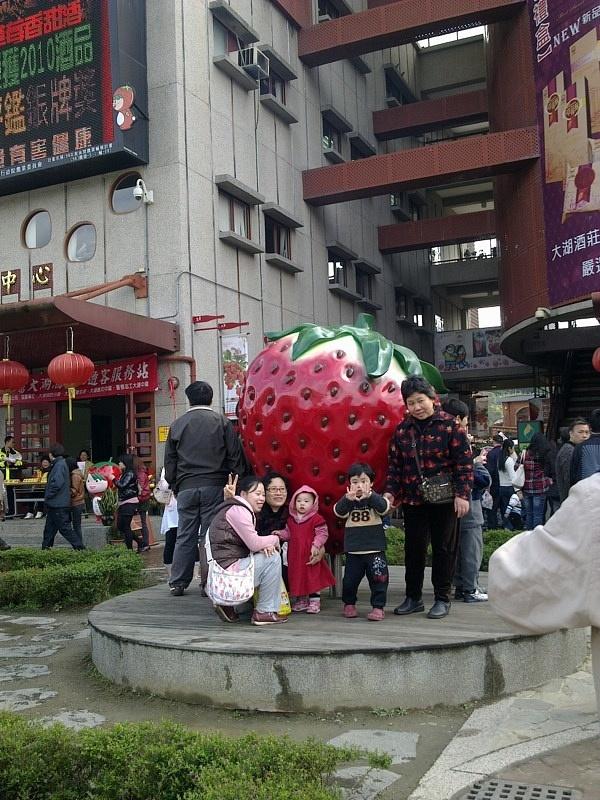strawberry garden 2