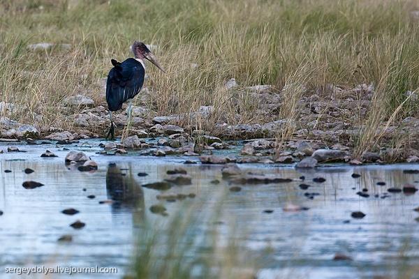 Namibia by sdolya by sdolya
